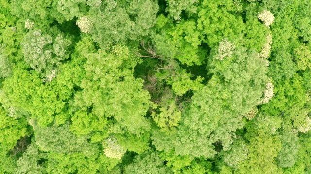 Crown of trees of Deciduous forest aerial view video