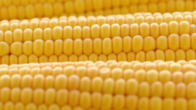 crude corn video