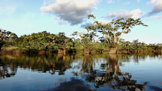 Cruise on Amazon lake video