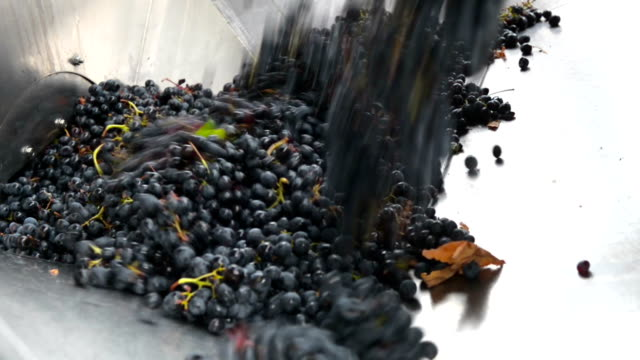 Crushing grapes video