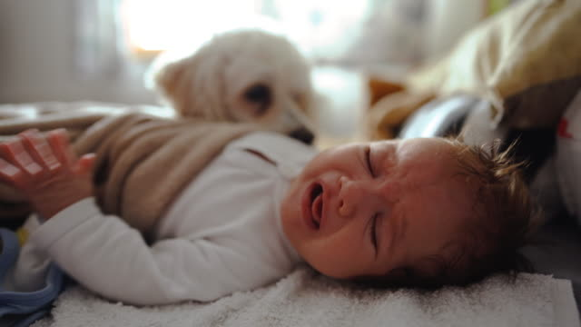 Crying newborn baby lying on the bed with his dog video