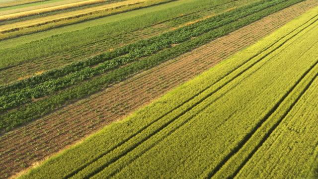 空から見た洗練された郊外の - マルチコプター点の映像素材/bロール