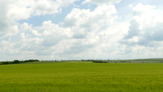 Cumulus Clouds Flying Over Green Field Majestic fluffy white cumulus clouds are slowly moving in the sky over fresh green wheat field. Rural idyllic landscape ideal for nature background. grass area stock videos & royalty-free footage