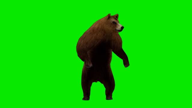 好奇心の強いベア緑色の画面(ループ ビデオ