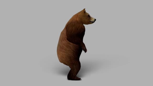 好奇心の強いクマ、アルファチャネル(ループ ビデオ