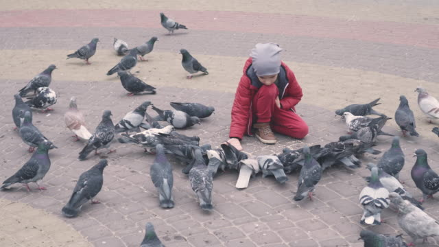 Curious boy sitting and feeding pigeons from the hand video