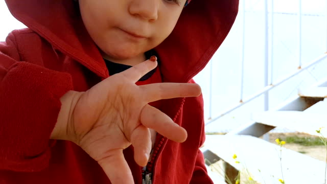 curious child looking at the ladybug on his hand - curiosità video stock e b–roll