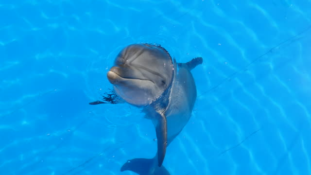 curious dolphin jumps out of water curious dolphin jumps out of water dolphin stock videos & royalty-free footage