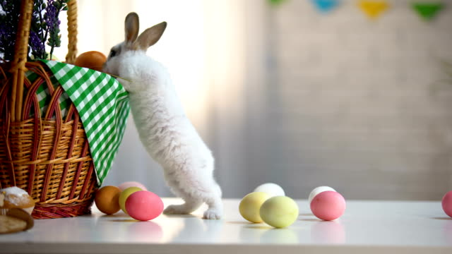 vídeos y material grabado en eventos de stock de curioso conejito de pascua cerca de canasta y huevos de colores, fiesta religiosa de la primavera - pascua