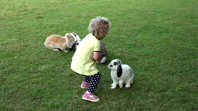 Curious girl with curly hairs have fun between rabbits bunnies in zoo garden video