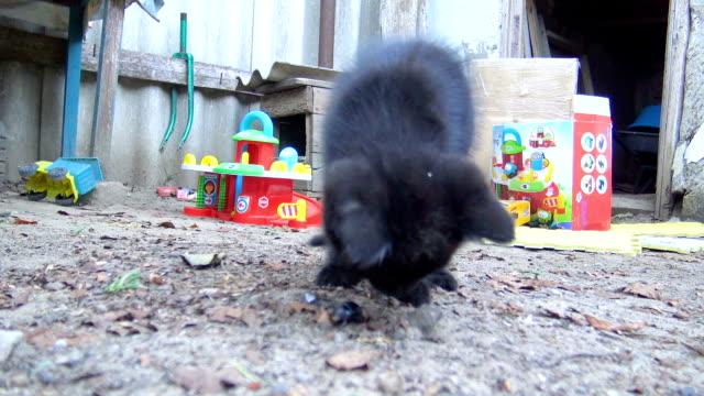 vídeos de stock, filmes e b-roll de gatinho curioso cheirar e brincar com besouro - felino