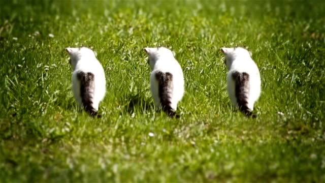 Curious kittens in the grass video