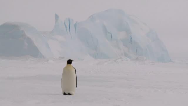 ciekawski pingwin - pingwin filmów i materiałów b-roll