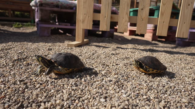 Curious turtles having an outdoor adventure