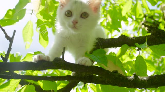 LENS FLARE: Curious white kitten looks around the large sunlit tree canopy.