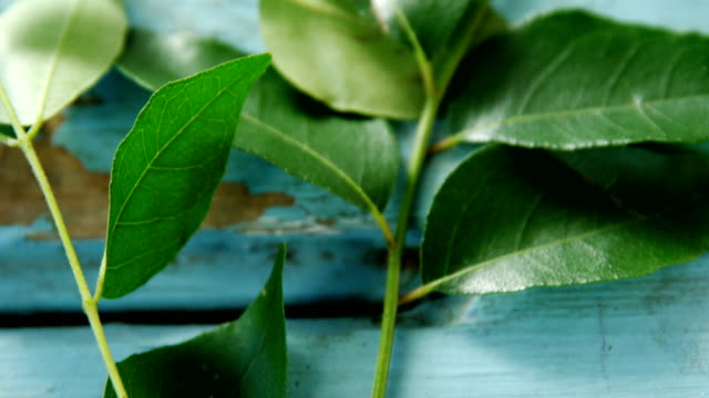 Curry leaves on wooden table 4k video