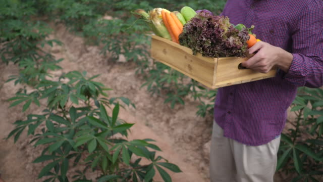 Customers come to buy organic vegetables at their farms. video
