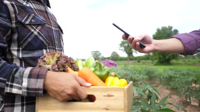 Customers use a mobile phone to check organic vegetables at a farm. - video