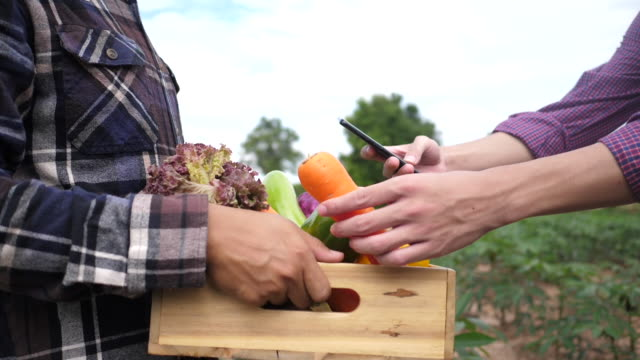 Customers use a smartphone to check organic vegetables at a farm. video