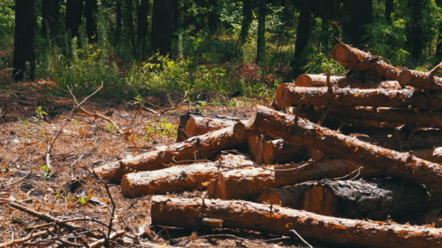 cut logs are stacked in a forest - albero caduto video stock e b–roll