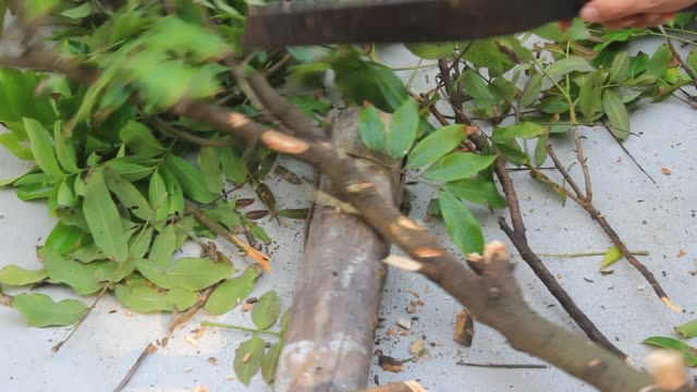 cut the tree with the knife - lega metallica video stock e b–roll