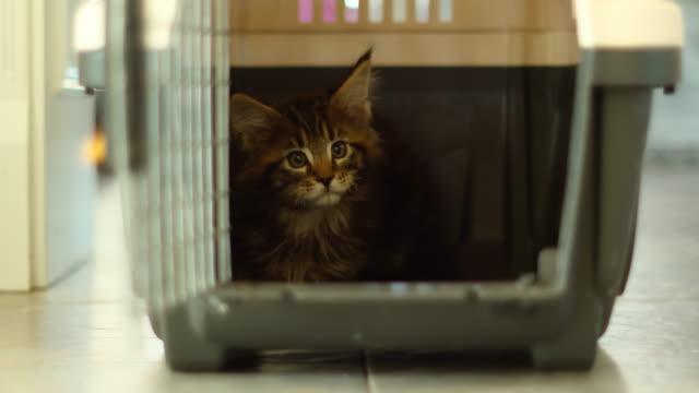 vídeos de stock e filmes b-roll de cute adorable small kitten inside transport box - engradado