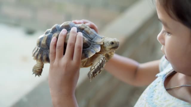 Cute asian child holding and playing with turtle. She is not scared to hold it on hand. Concept of self learning and love animal lifestyle. Video record in light nature reptile stock videos & royalty-free footage