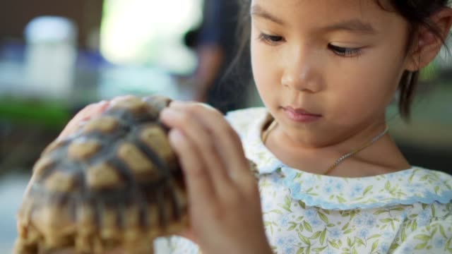 cute asian child holding and playing with turtle. she is not scared to hold it on hand. concept of self learning and love animal lifestyle. - żółw lądowy filmów i materiałów b-roll