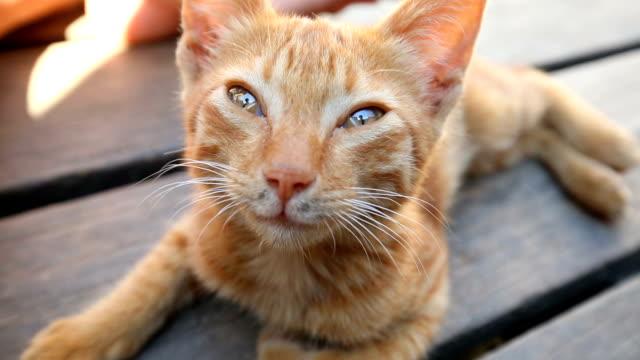 cute baby cat caress - кошка смешанной породы стоковые видео и кадры b-roll