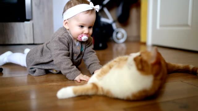 vídeos de stock e filmes b-roll de cute baby girl playing with the cat - super baby