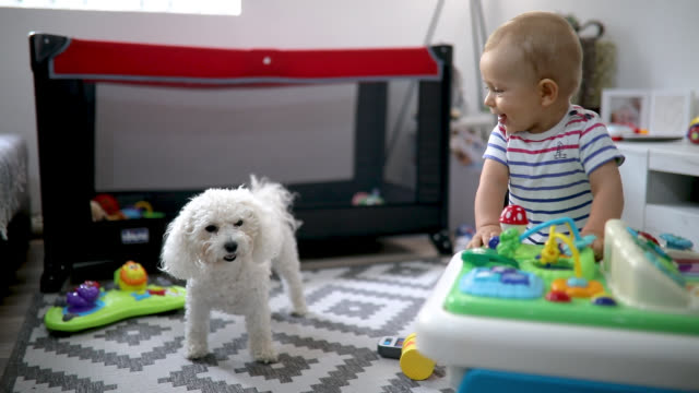cute baby playing with toys - neonati maschi video stock e b–roll