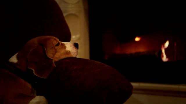 süße beagle lehnen sie sich im sessel vor dem feuer im kamin blickering - cozy stock-videos und b-roll-filmmaterial