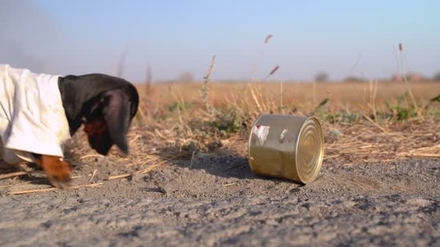 Cute black and tan puppy dachshund wearing old t-shirt eats leftovers from metal can on the ground. Homelessness concept, lost or stray dogs on the city streets Cute black and tan puppy dachshund wearing old t-shirt eats leftovers from metal can on the ground. Homelessness concept, lost or stray dogs on the city streets. leftovers stock videos & royalty-free footage