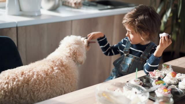 cute boy sharing his cookie with his pet - deser filmów i materiałów b-roll