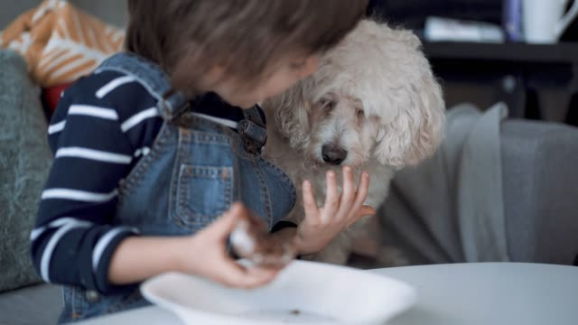 Cute Boy Sharing His Cookie With His Pet Cute Boy Sharing His Cookie With His Pet, Adorable Fluffy Poodle Dog hungry child stock videos & royalty-free footage