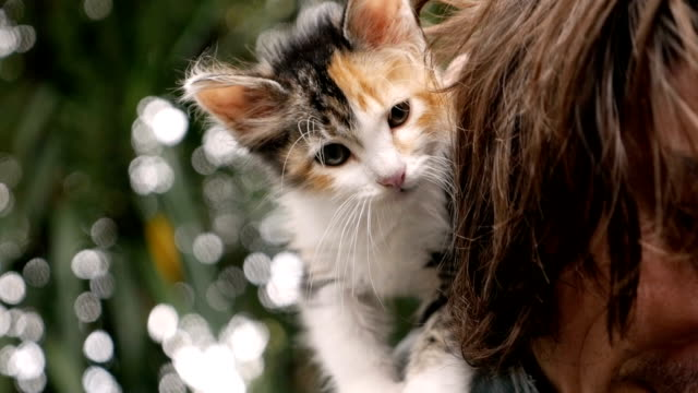 Cute calico kitten standing on a young man's shoulder Cute calico kitten standing on his young male owner's back in slow motion tortoise shell stock videos & royalty-free footage