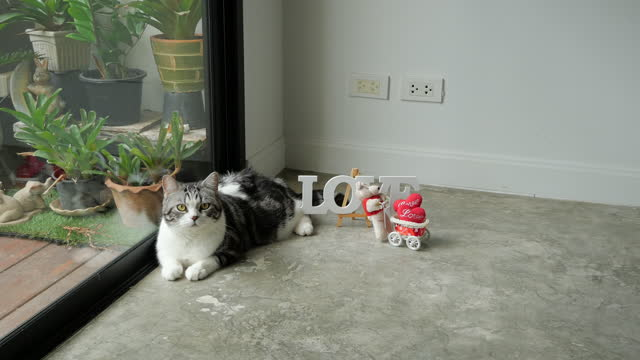 Cute cat and Love wording with little bear toy and red heart in living room