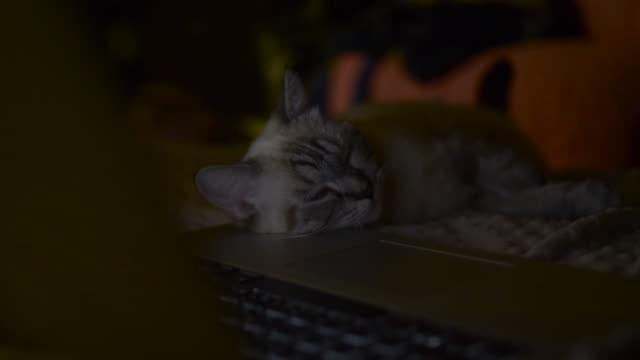 Cute cat play digital laptop