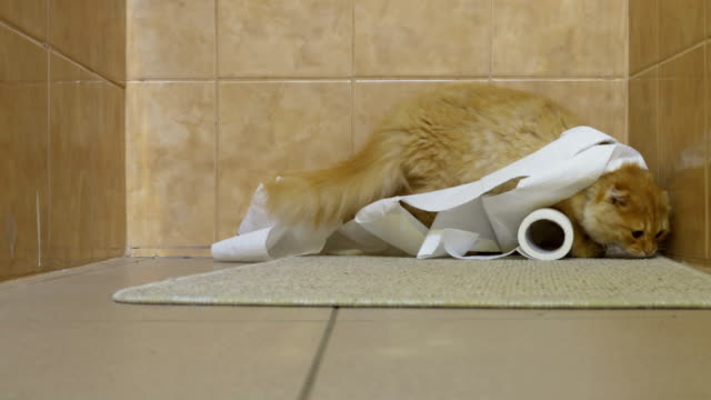 Cute cat playing with roll of toilet paper in bathroom - vídeo