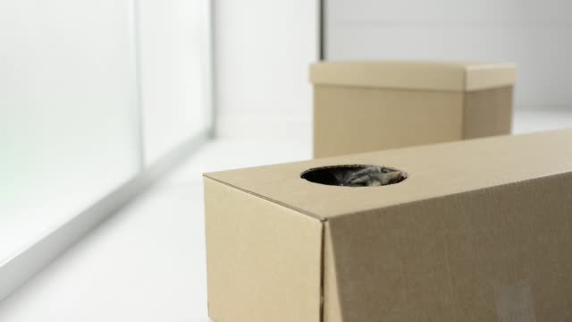 Cute cat popping out from a box Cute cat playing, hiding and popping out from a cardboard box hiding stock videos & royalty-free footage