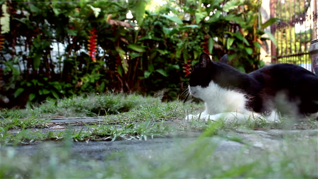 Cute cat relaxing on the grass in the garden, dolly shot video