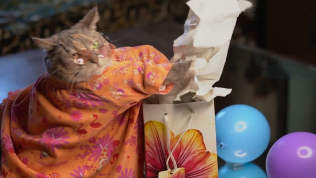 cute cate opening package gift This video shows a cute cat in a dress opening a colorful package gift, excitedly taking out the tissue paper. wrapped stock videos & royalty-free footage