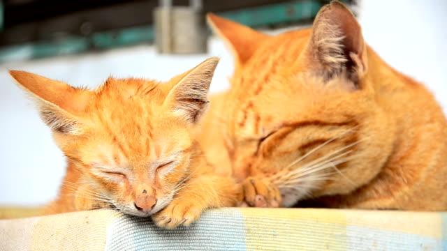 cute cats family - djurfamilj bildbanksvideor och videomaterial från bakom kulisserna