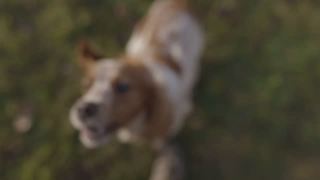 Cute cheerful dog running on grass field