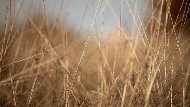 coppia carina nella natura - hippy video stock e b–roll