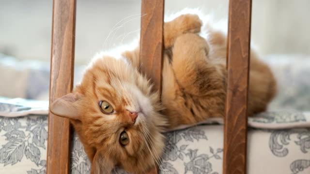 vídeos y material grabado en eventos de stock de lindo gato curioso jengibre acostado en la cama del niño. animal doméstico mullido asomó su cabeza entre los rieles de la cuna. acogedor mañana en casa - vibrisas