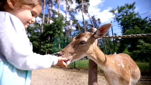 vidéos et rushes de jolie fille et sa mère, nourrir les animaux - zoo