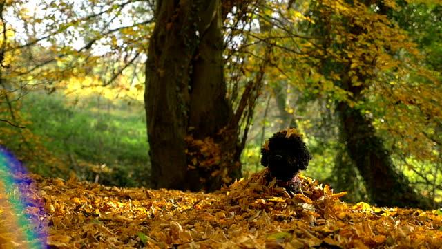 Cute dog in autumn video