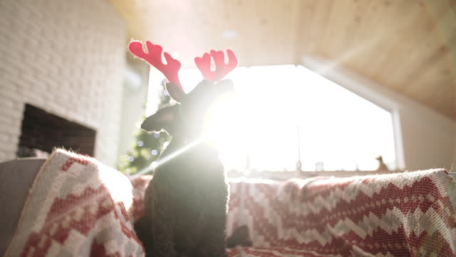 cute dog in deer costume - poroże filmów i materiałów b-roll