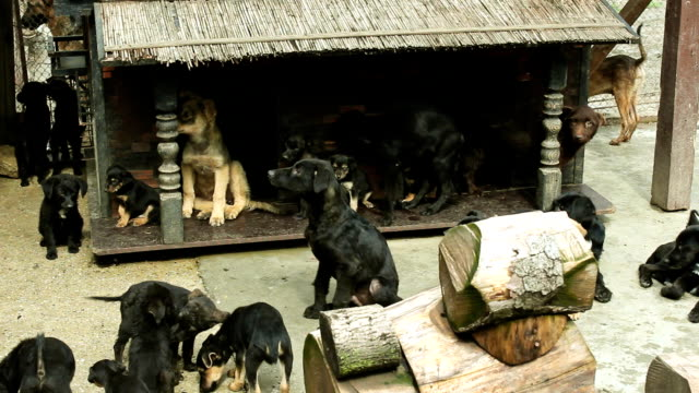 cute dogs in the yard group of a cute dogs in the yard hound stock videos & royalty-free footage